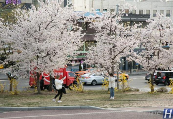 充满香气的汉阳大学首尔校区
