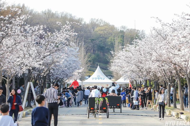 2019 ERICA캠퍼스 오픈캠퍼스 40주년 벚꽃 행사 현장