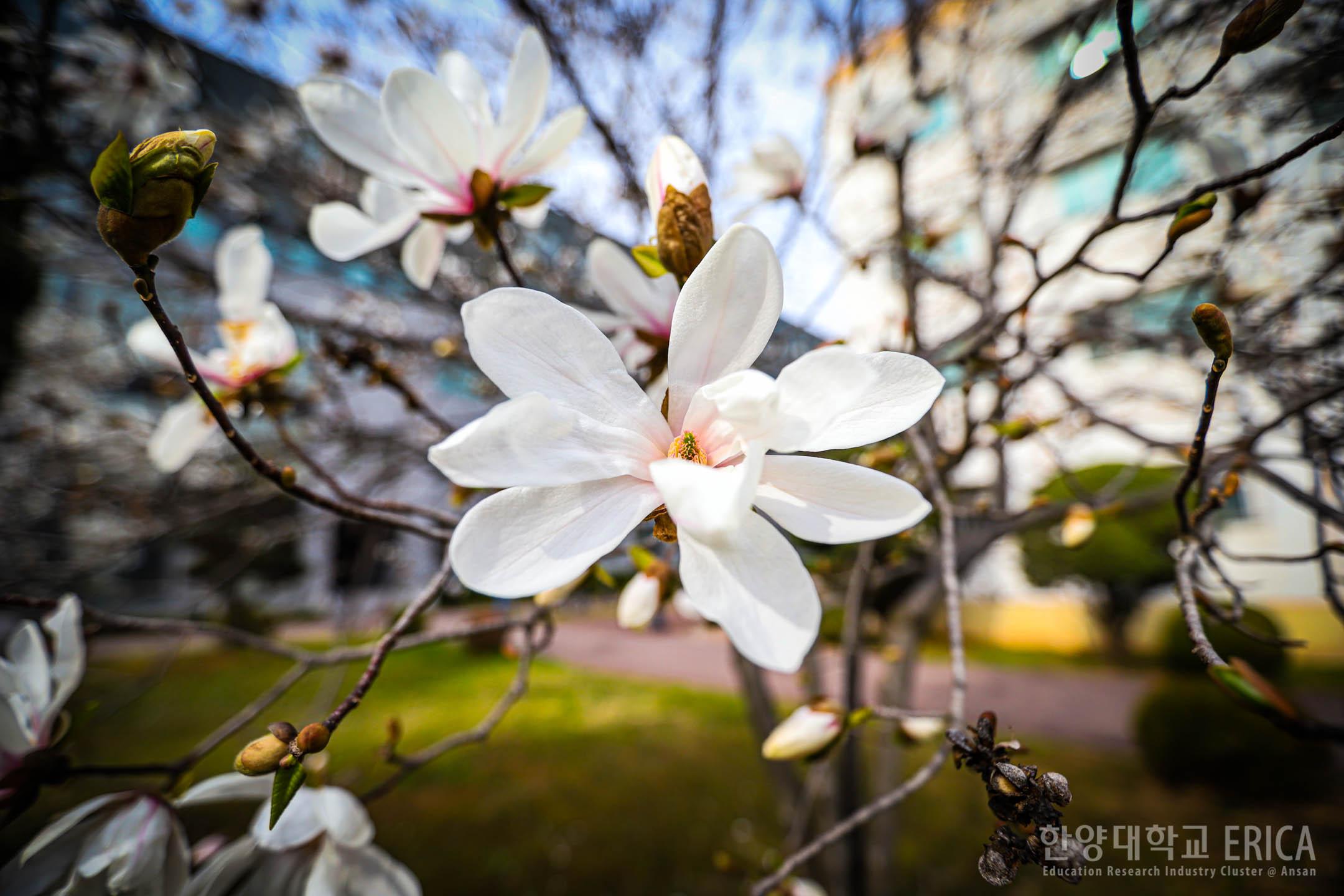 ERICA에 찾아온 봄