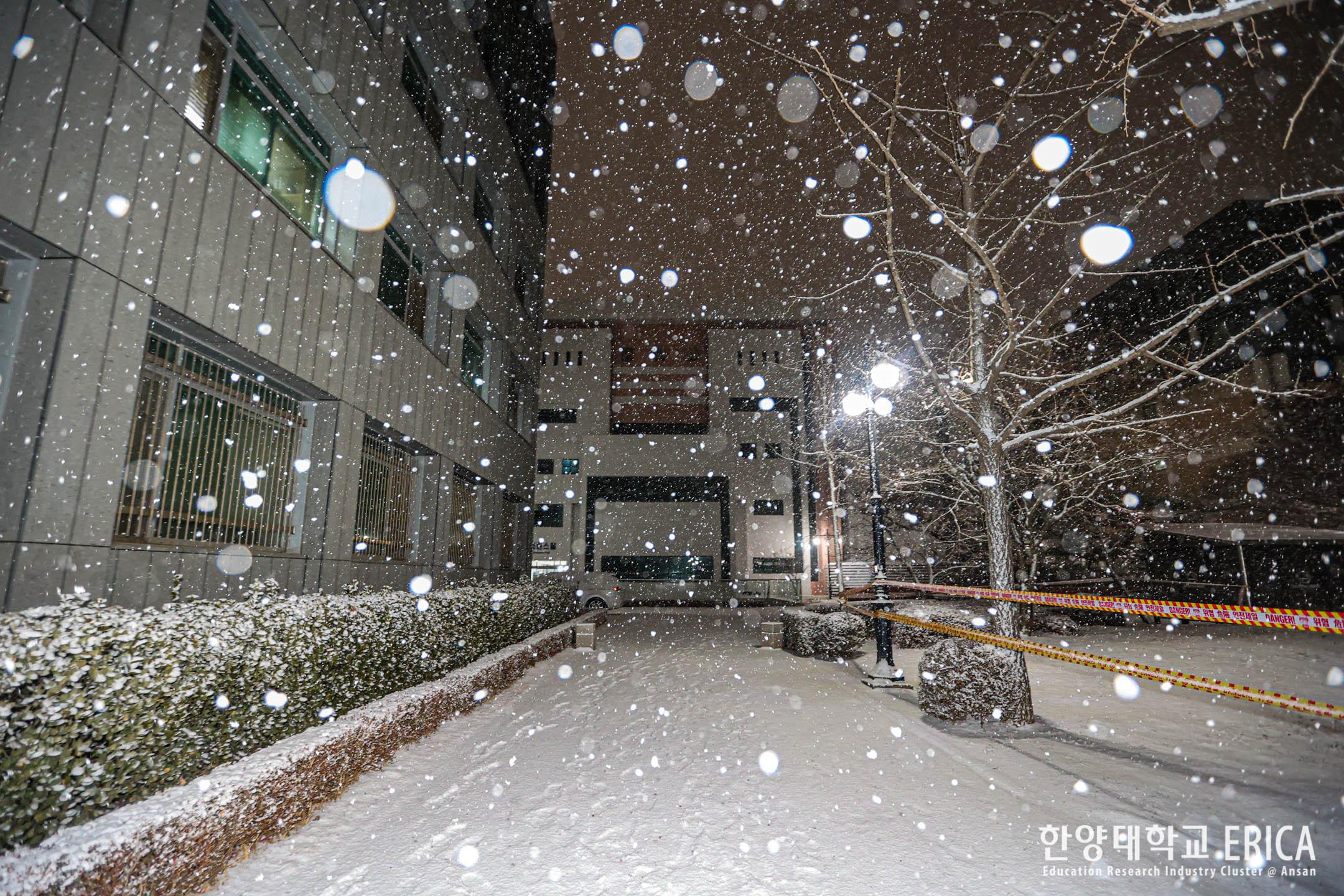 2021 눈 오늘 겨울밤