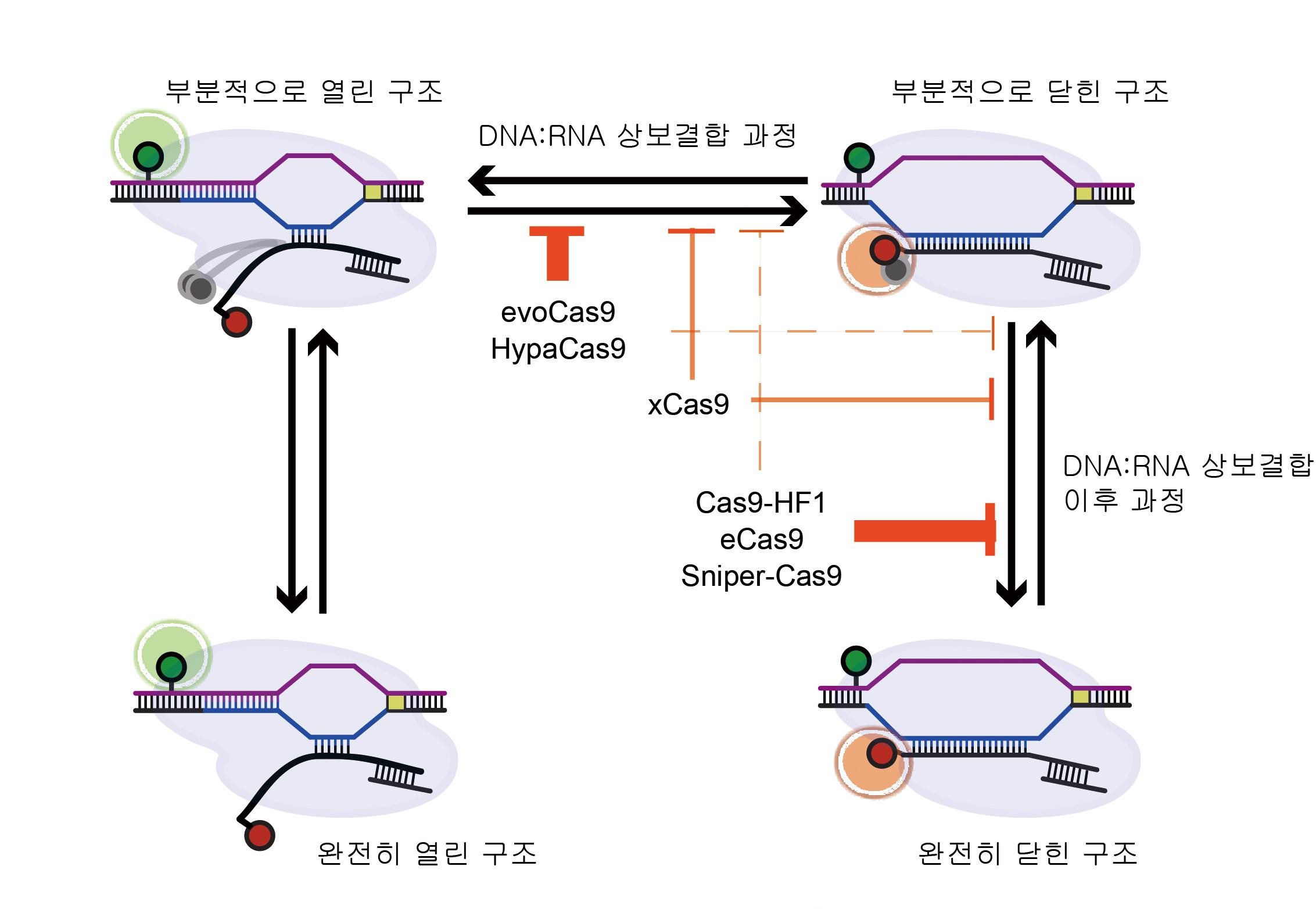 [21.10.07]한양대 배상수 교수, 부작용 없는 유전자가위 개발에 초석 다져
